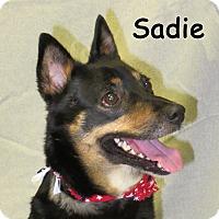 Adopt A Pet :: Sadie - Warren, PA