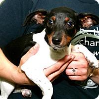 Adopt A Pet :: Tom - Erwin, TN