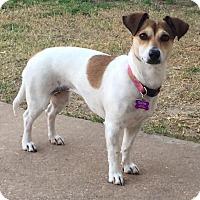 Adopt A Pet :: Sadie in Austin, TX - Austin, TX