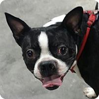 Adopt A Pet :: Liam - Jackson, TN