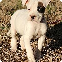 Adopt A Pet :: Molly - Windham, NH
