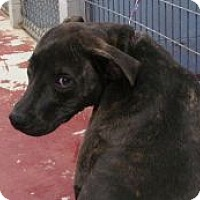 Adopt A Pet :: Buddy - Silver City, NM