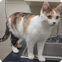 Adopt A Pet :: Adele - Willmar, MN