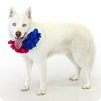Adopt A Pet :: Snow White - St. Cloud, FL