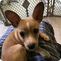 Adopt A Pet :: Er Litter - Juan - APPLICATIONS CLOSED - Livonia, MI