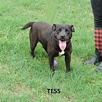 Adopt A Pet :: Tess - Washington, GA