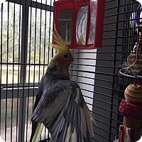 Adopt A Pet :: Oscar & Lennie - Punta Gorda, FL