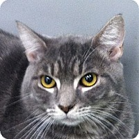 Adopt A Pet :: Leary - Winchester, CA