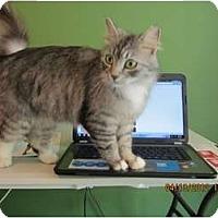 Adopt A Pet :: Princess Puff - Bunnell, FL