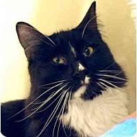 Adopt A Pet :: Newport - Plainville, MA
