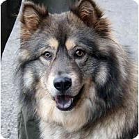 Adopt A Pet :: Eliza - Los Altos, CA