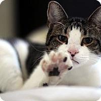 Adopt A Pet :: Tyler - Alexandria, VA