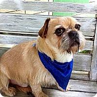 Adopt A Pet :: MAXIMUS - ADOPTION PENDING - Little Rock, AR