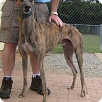 Adopt A Pet :: Bart - Oak Ridge, NC