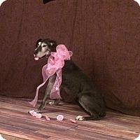Adopt A Pet :: Ruthie - St. Louis, MO