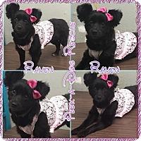 Adopt A Pet :: Raven - South Gate, CA