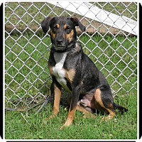 Adopt A Pet :: Cricket - Indian Trail, NC