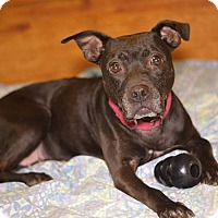 Adopt A Pet :: CARLY - Linden, NJ