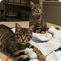 Adopt A Pet :: Josh and Amber-perfect pair - Los Angeles, CA