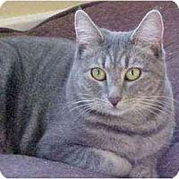 Adopt A Pet :: Amber (w/Irving) - Portland, OR