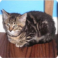 Adopt A Pet :: Delila - Warren, MI