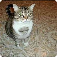Adopt A Pet :: Princess Le Deux - Toronto, ON