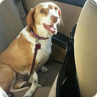 Adopt A Pet :: Shiloh - Plainfield, IL