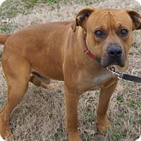 Adopt A Pet :: Buster - North, VA
