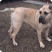 Adopt A Pet :: PRECIOUS - Oswego, IL