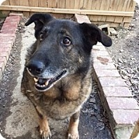 Adopt A Pet :: Maxine - Memphis, TN