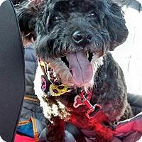 Adopt A Pet :: Monty - Millersville, MD