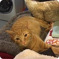 Adopt A Pet :: Alister - Fairfax, VA