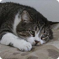 Adopt A Pet :: Johnny - Osage Beach, MO