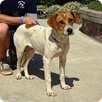 Adopt A Pet :: Duncan - Lathrop, CA