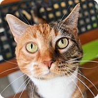 Adopt A Pet :: Butter - Michigan City, IN