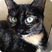 Adopt A Pet :: Peanut - Kalamazoo, MI