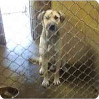 Adopt A Pet :: Scrappy --URGENT - Princess Anne, MD