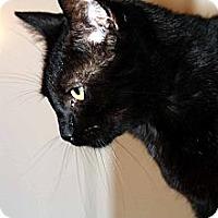 Adopt A Pet :: Theodore - New Port Richey, FL
