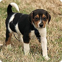 Adopt A Pet :: Tyler - Staunton, VA