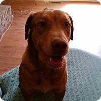 Adopt A Pet :: Buster - Huntsville, AL