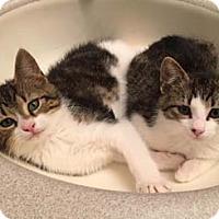 Adopt A Pet :: Riley - Merrifield, VA