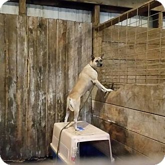 Shepherd (Unknown Type) Mix Dog for adoption in Newport, Michigan - Hermione