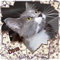 Adopt A Pet :: Dina - Harrisburg, NC