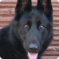 Adopt A Pet :: Blackjack von Bleckede - Los Angeles, CA