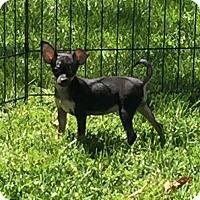 Adopt A Pet :: Smooth - Fort Wayne, IN