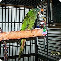 Adopt A Pet :: Beau - Lexington, GA