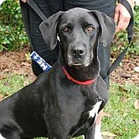 Adopt A Pet :: Savannah - Harrisburgh, PA