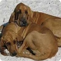 Adopt A Pet :: Tank and Emma - Carrollton, GA