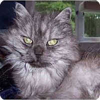 Adopt A Pet :: Misty Grayce - Summerville, SC