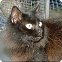 Adopt A Pet :: Fluffy - Winter Haven, FL